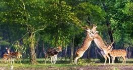 সুন্দরবন থেকে ৩ হরিণ শিকারী আটক