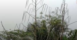 তালা উপজেলার সজিনা যাচ্ছে বাইরের মোকামে