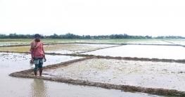 খাজরায় বীজতলা পরিচর্চায় ব্যস্ত সময় পার করছেন কৃষকরা