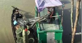 সুন্দরবন সাতক্ষীরা রেঞ্জে নৌকাসহ ২৫০ কেজি কাঁকড়া জব্দ
