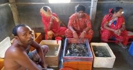 কালীগঞ্জে পুশকৃত বাগদা বিনষ্ট ও ব্যবসায়িকে জরিমানা
