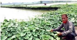কলারোয়ায় ঘেরের আইলে খেরাই চাষে স্বাবলম্বী আব্দুল করিম